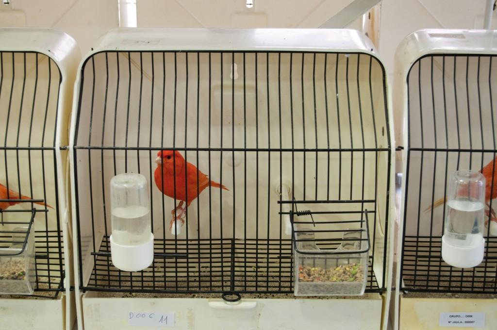 concurso-ornitologico-1